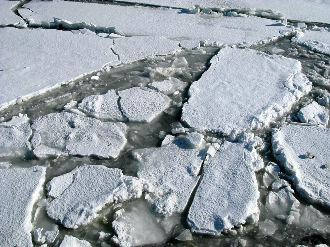 Abigail O'Brien RHA, Arctic Hysteria, 2012